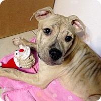 Adopt A Pet :: Hunter - Cincinnati, OH
