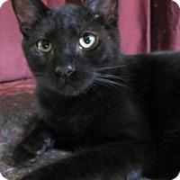 Adopt A Pet :: Spider - Covington, KY