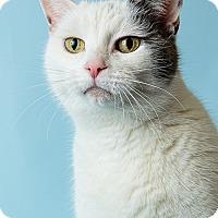 Adopt A Pet :: Cloudy - Hendersonville, NC