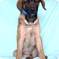 Adopt A Pet :: Keenen - Waldorf, MD