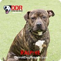 Adopt A Pet :: Ralphie - St. Clair Shores, MI