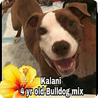 Adopt A Pet :: Kalani - Plainfield, IL
