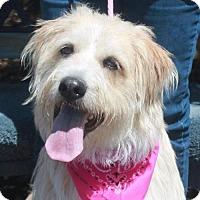 Adopt A Pet :: Callie-PENDING - Garfield Heights, OH