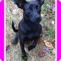 Adopt A Pet :: WILLOW - New Brunswick, NB