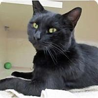Adopt A Pet :: Cinder - Riverhead, NY