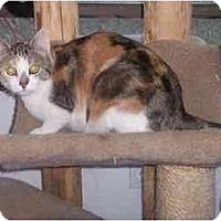 Adopt A Pet :: Little Girl - Quincy, MA