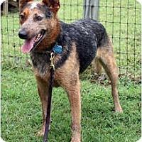 Adopt A Pet :: Dutch - Siler City, NC