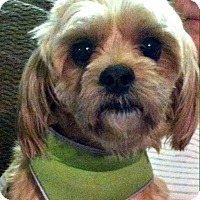 Adopt A Pet :: Ruffus-VA - Suffolk, VA