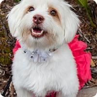 Adopt A Pet :: MIRAH - Redondo Beach, CA