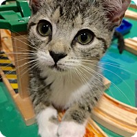 Adopt A Pet :: Dawn - Colmar, PA