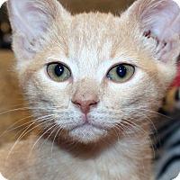Adopt A Pet :: Faline - Irvine, CA