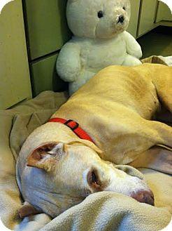 Terrier (Unknown Type, Medium) Mix Dog for adoption in Huntley, Illinois - Magnolia (Maggie)