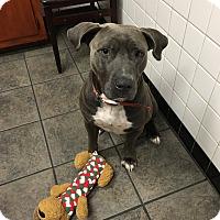 Adopt A Pet :: Leo - Lake Charles, LA