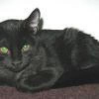Adopt A Pet :: Myra - Powell, OH