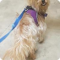 Adopt A Pet :: Gaston - Wellington, FL