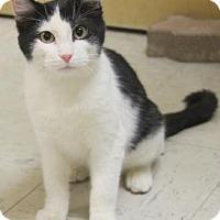 Adopt A Pet :: Cyrus - Verona, WI