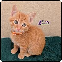 Adopt A Pet :: Nemo - Richardson, TX