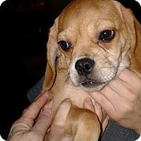 Adopt A Pet :: Alex Orlando Chapter - Orlando, FL