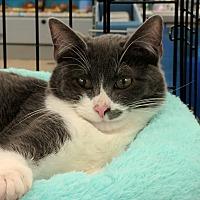 Adopt A Pet :: Danny - Port Republic, MD