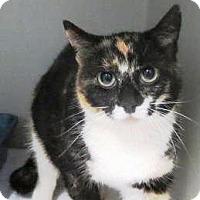 Adopt A Pet :: Arianna - Lincolnton, NC
