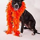 Adopt A Pet :: Fiona - Denton, TX