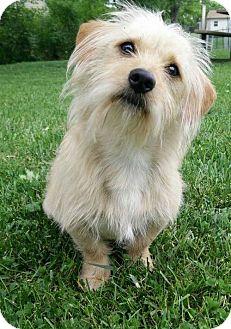 Dachshund Mix Dog for adoption in Orangeburg, South Carolina - Trouper