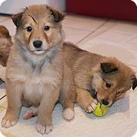 Adopt A Pet :: Puppies! - Hamilton, ON