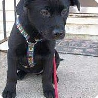 Adopt A Pet :: Daisy (Fostered in NH) - Windham, NH