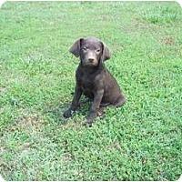 Adopt A Pet :: Oliver - In CT! - Adamsville, TN