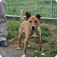 Adopt A Pet :: Oliver - Harrisburgh, PA