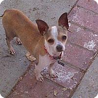 Adopt A Pet :: Tick Tock - West Hills, CA