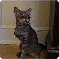 Adopt A Pet :: Floyd-3 legs - Arlington, VA