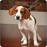 Adopt A Pet :: Mr. Peabody - Owensboro, KY