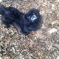 Adopt A Pet :: Wiggles - Orlando, FL