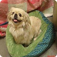 Adopt A Pet :: Zena - Virginia Beach, VA