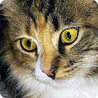 Adopt A Pet :: Addy - Irvine, CA