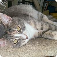 Adopt A Pet :: Jill - Modesto, CA