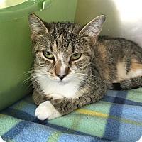 Adopt A Pet :: Angie & Rockette - Trevose, PA