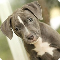 Adopt A Pet :: Toby - Reisterstown, MD