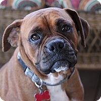 Adopt A Pet :: Kate - Glastonbury, CT