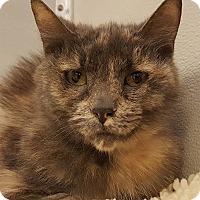 Adopt A Pet :: Jeanie - Grayslake, IL