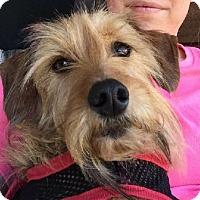 Adopt A Pet :: Sassy - Mary Esther, FL