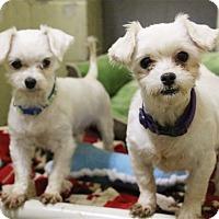 Adopt A Pet :: Nora - Elyria, OH