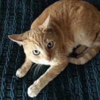 Adopt A Pet :: Tess - Fullerton, CA