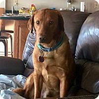 Adopt A Pet :: Rocky - Island Lake, IL