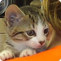 Adopt A Pet :: Ruth - Crawfordville, FL