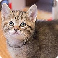 Adopt A Pet :: Gardenia - Chicago, IL