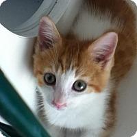 Adopt A Pet :: Dock - Hamilton, ON