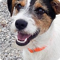 Adopt A Pet :: Jennie - adoption pending - Norwalk, CT