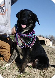 Mixed Breed (Large) Mix Dog for adoption in Glenpool, Oklahoma - Teddy
